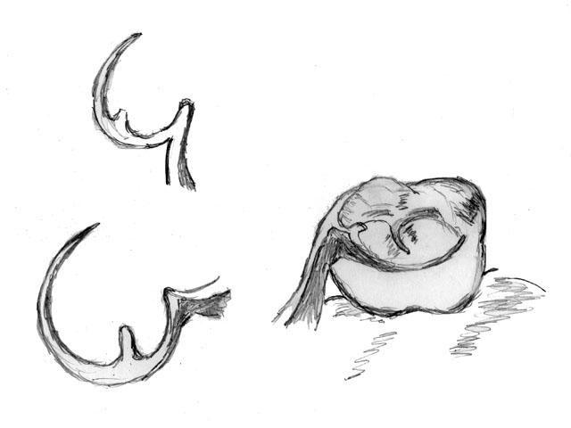 Кламер №4 (кільцевий, одноплечовий)