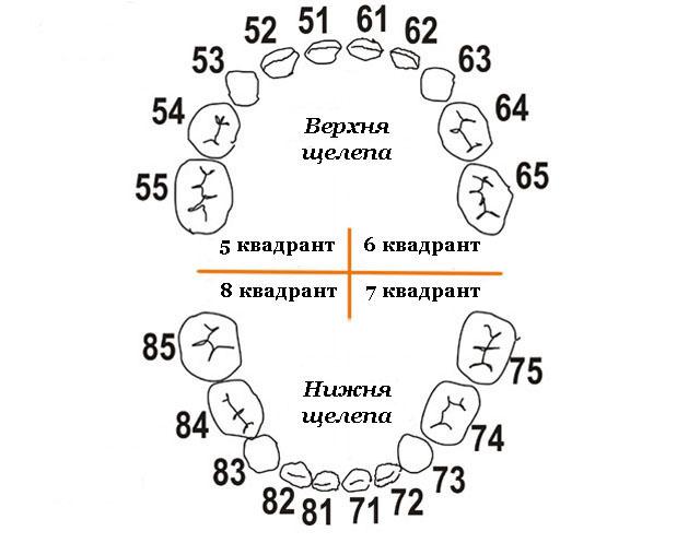 Нумерація молочних зубів